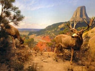 The American Museum of Natural History New York - Diorana Wildlife