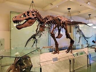 American Museum of Natural History in New York - Dinosaur