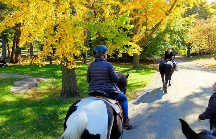Horseback Riding in Central Park - riding